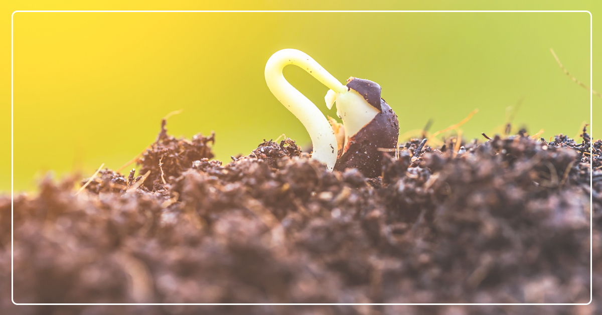 6ca9dabbb137 Tips for Successfully Gardening In Utah - IFA Country Stores