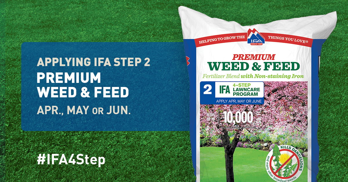 Weed Feed Step 2 To A Healthy Lawn IFA Country Stores