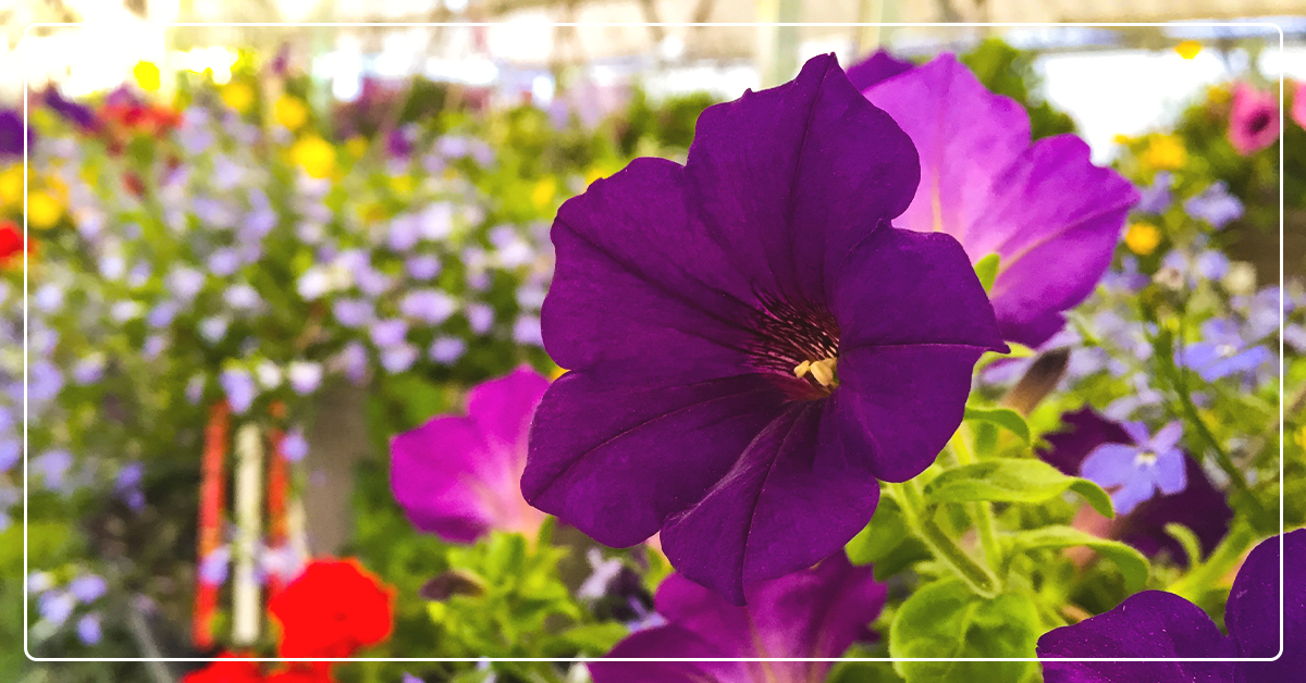 Create the most beautiful flower baskets and planters - IFA
